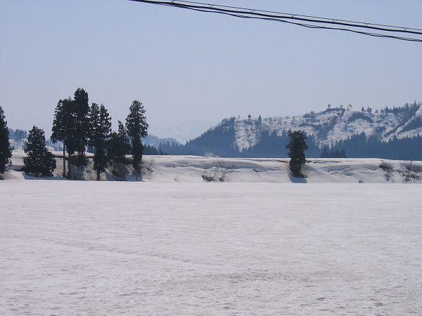 ポカポカの陽気で雪解けが進んでいます@魚沼産コシヒカリの田んぼ
