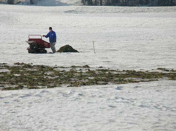 雪で覆われている田んぼで農作業は始まっています