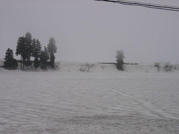 今朝は弱い雨が降っていて肌寒く感じます@魚沼産コシヒカリの田んぼ