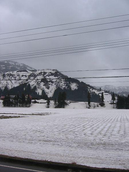昨日に続いて肌寒い一日になりました@魚沼産コシヒカリの田んぼ