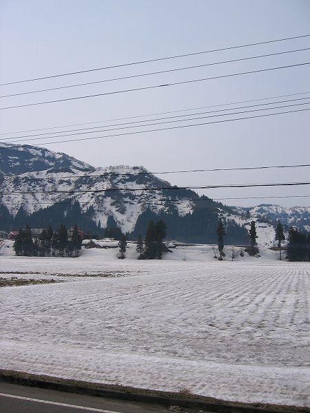 今朝はくもりであまり寒さを感じません@魚沼産コシヒカリの田んぼ by IXY DIGITAL 400