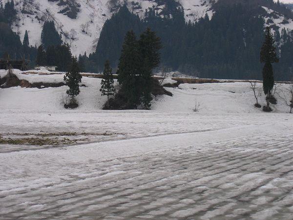 田んぼの雪解けがかなり進みました@魚沼産コシヒカリの田んぼ by IXY DIGITAL 400