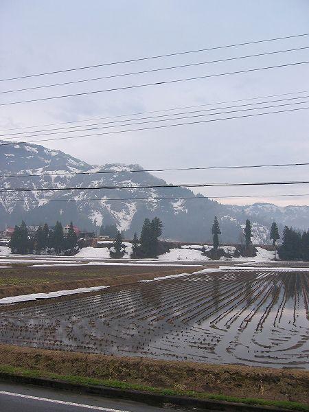 今朝は雨降り@魚沼産コシヒカリの田んぼ
