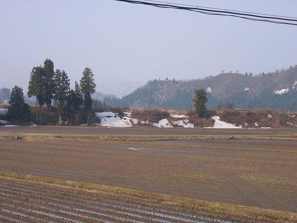 春らしいあたたかい朝です@魚沼産コシヒカリの田んぼ