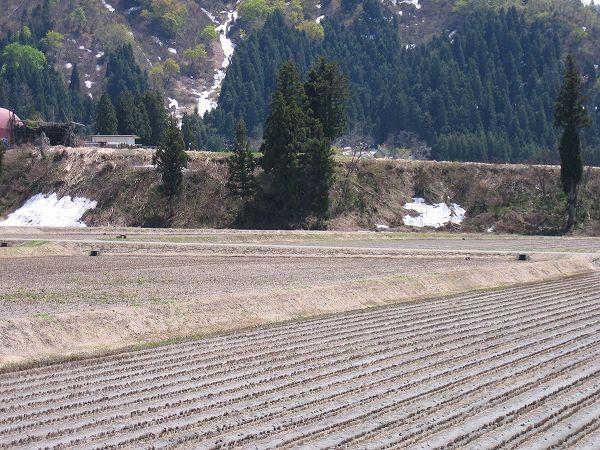 いい天気で気温が高くなりました@魚沼産コシヒカリの田んぼ