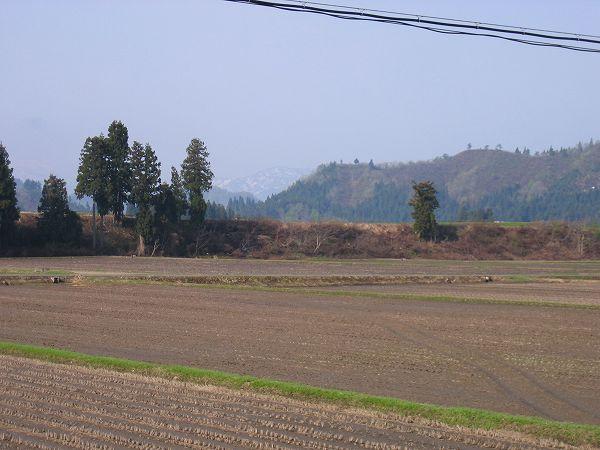 あたたかい朝です@魚沼産コシヒカリの田んぼ