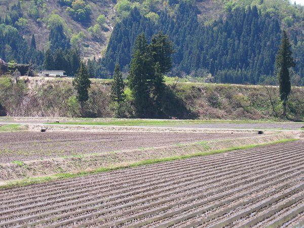 初夏を感じるいい天気になりました@魚沼産コシヒカリの田んぼ