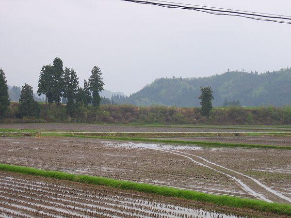 今日は弱い雨が降っています