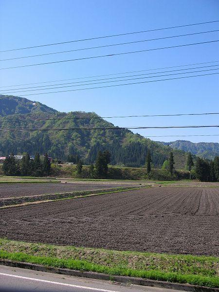 青空が澄んで風が涼しい朝です@魚沼産コシヒカリの田んぼ