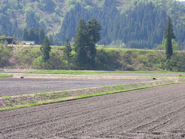 爽やかな初夏のいい天気です@魚沼産コシヒカリの田んぼ