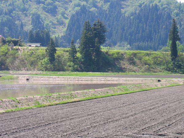 青空が広がって農作業日和となりました@魚沼産コシヒカリの田んぼ