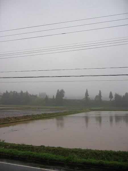 魚沼産コシヒカリの田んぼは雨降りで空気がひんやりしています