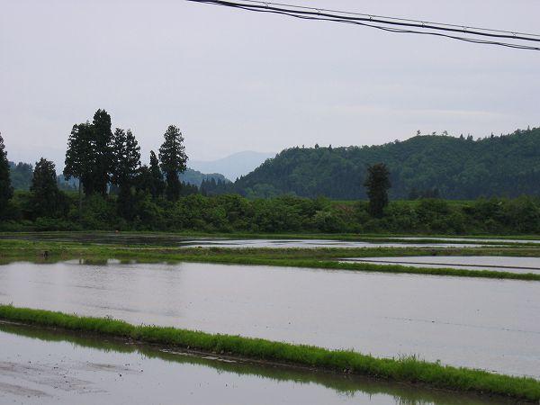 今日はくもりで涼しいです@魚沼産コシヒカリの田んぼ