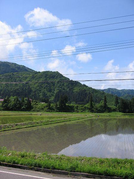 魚沼産コシヒカリの田んぼは雨上がりで空気が澄んでいます