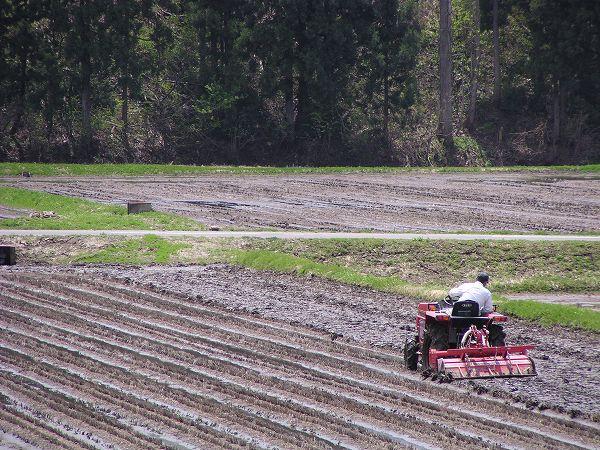 トラクターによる田起こし作業が行われています@魚沼産コシヒカリの田んぼ