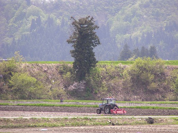 トラクターによる田起こし作業@魚沼産コシヒカリの田んぼ