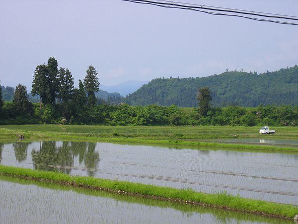 魚沼産コシヒカリの田んぼは天気がよくなってきました
