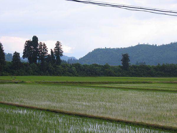 魚沼産コシヒカリの田んぼは今日も暑い一日でした