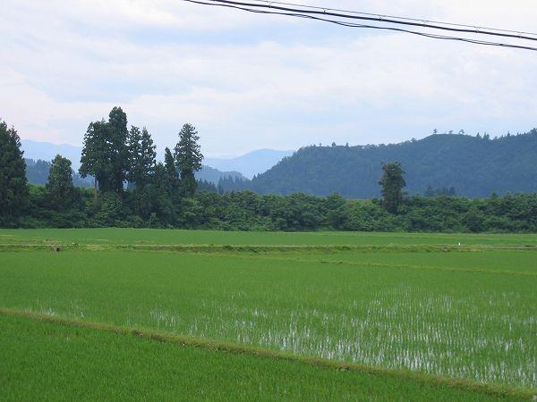 雲が多くなってきました@魚沼産コシヒカリの田んぼ