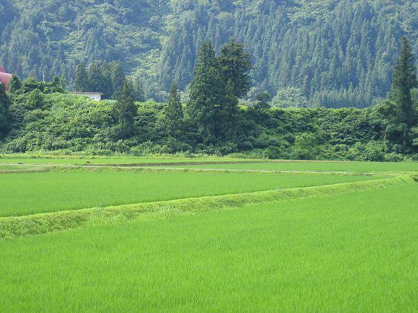 いよいよ梅雨明けした新潟県南魚沼市・・・今日も暑いです