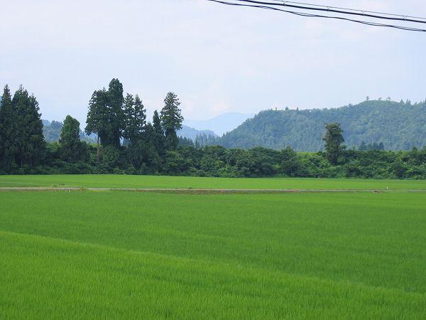 今日はくもりで蒸し暑いです@新潟県南魚沼市の田んぼ
