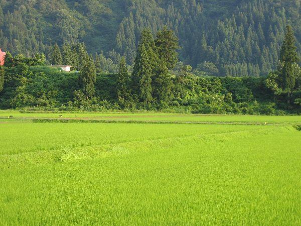 今日も新潟県南魚沼市は暑い一日でした
