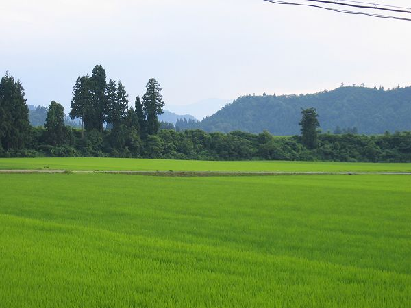 新潟県南魚沼市では相変わらず暑い日が続いています