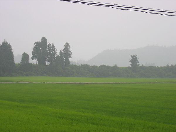 今日は涼しい一日~夕方になって小雨が降り始めています