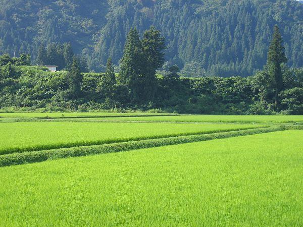 新潟県南魚沼市は朝から青空が広がって、今日は暑くなりそうです