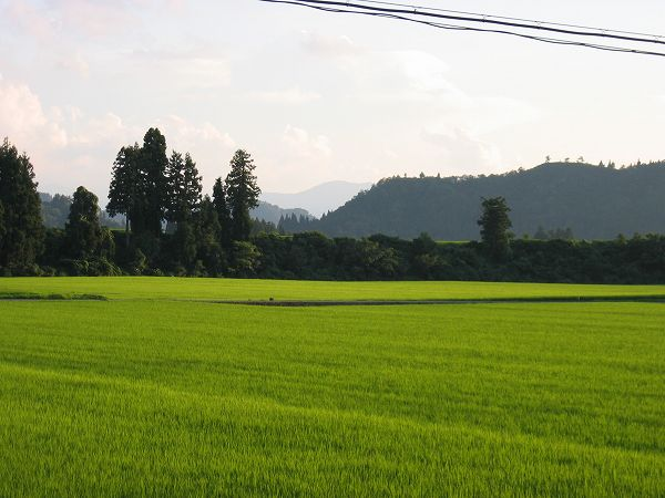 新潟県南魚沼市は今日もまた暑い一日でした