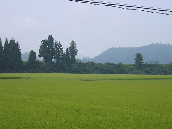 新潟県南魚沼市は蒸し暑い朝です
