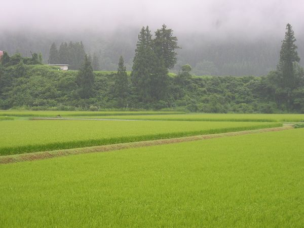今朝の新潟県南魚沼市は雨・・・山が霧に包まれています