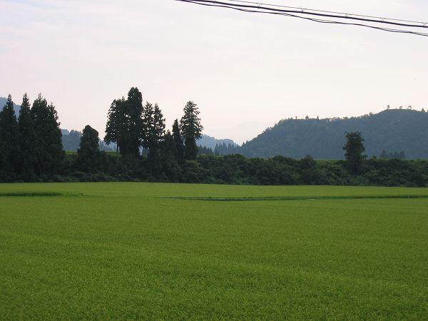 秋が近いことを感じさせる一日でした@魚沼産コシヒカリの田んぼ