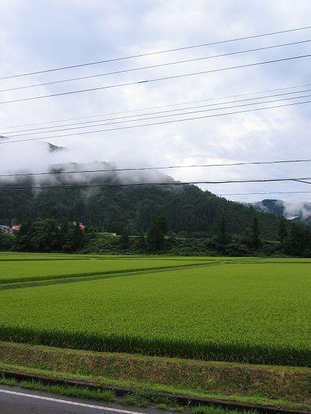 今朝もまた涼しいです@魚沼産コシヒカリの田んぼ