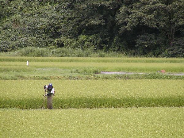 畔の草刈り作業@魚沼産コシヒカリの田んぼ
