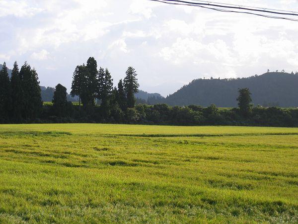 涼しくて過ごしやすい一日でした@新潟県南魚沼市