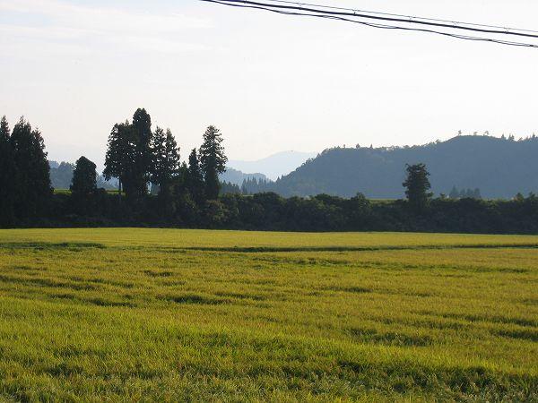 魚沼産コシヒカリの田んぼは今日もいい天気の一日でした