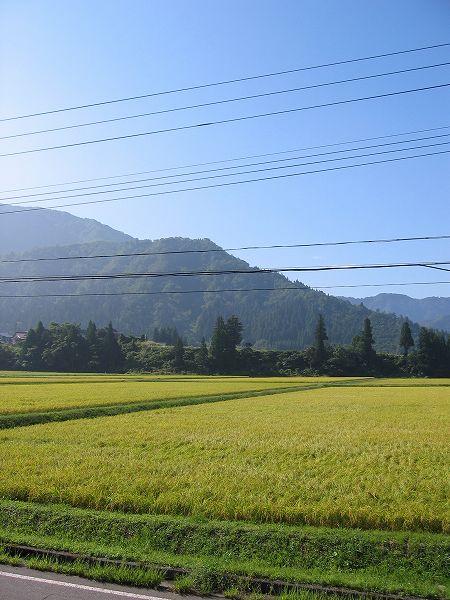 霧が晴れて青空が広がっています@魚沼産コシヒカリの田んぼ