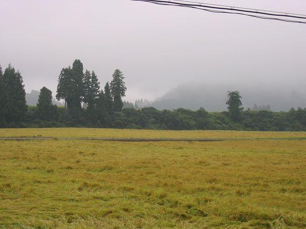 今朝もまた新潟県南魚沼市は肌寒いです