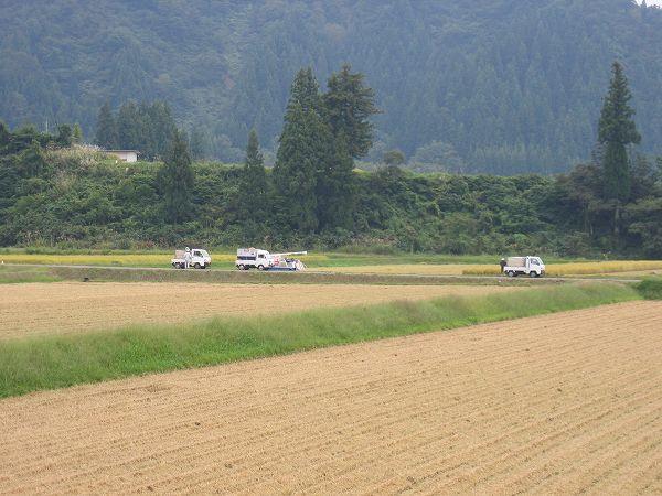 今日も稲刈り作業が行われています@新潟県南魚沼市