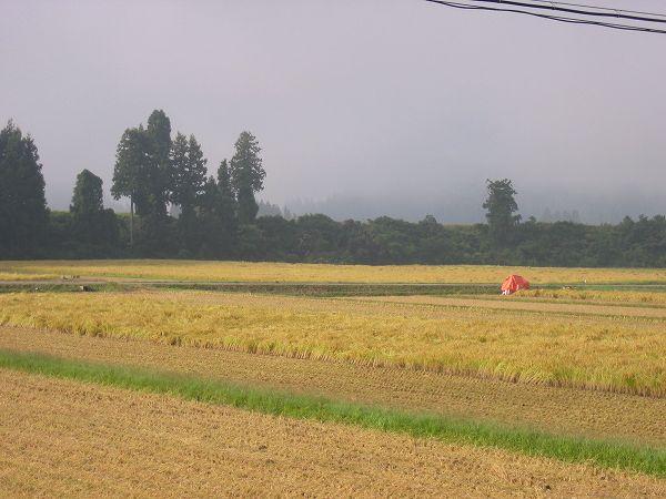 今日も魚沼産コシヒカリの稲刈り作業がはかどるでしょう