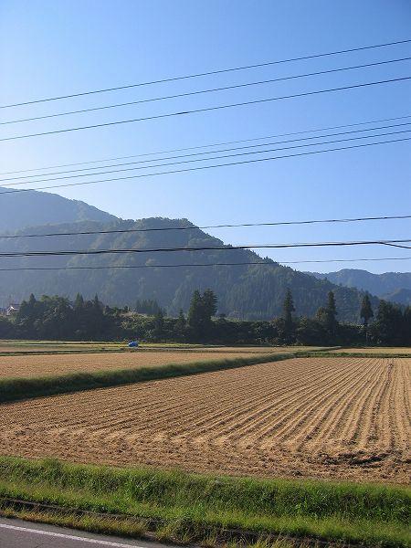 魚沼産コシヒカリの田んぼは今日もまた朝からいい天気です