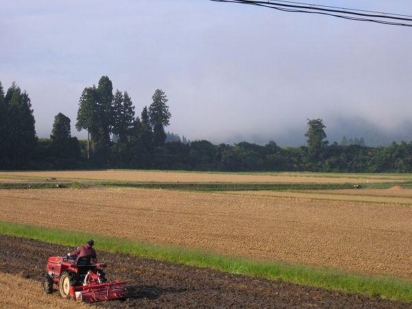 魚沼産コシヒカリの田んぼでは来年の稲作に向けての作業が行われています