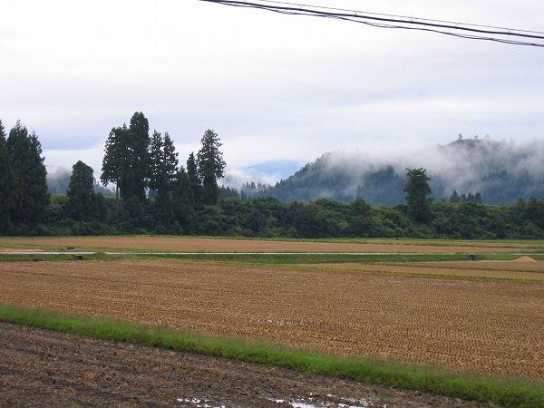 弱い雨ですが寒くはありません@魚沼産コシヒカリの田んぼ