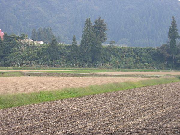 魚沼産コシヒカリの田んぼはあたたかくて過ごしやすい一日でした