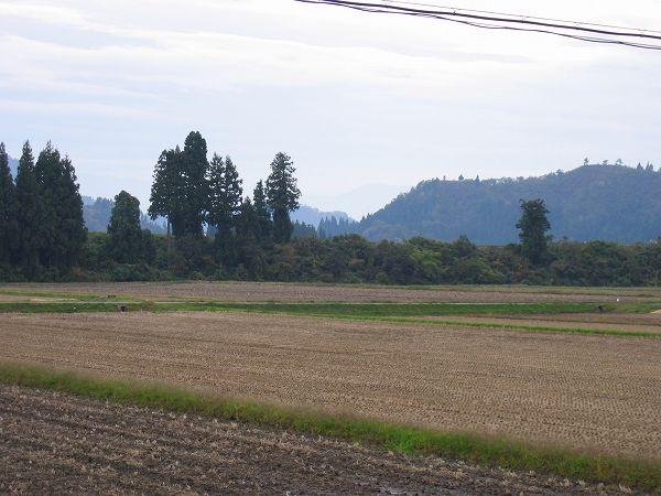 午前は雨、午後はくもりで寒いです@魚沼産コシヒカリの田んぼ