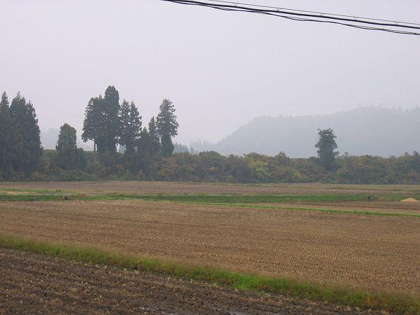 今朝の魚沼産コシヒカリの田んぼはくもりです
