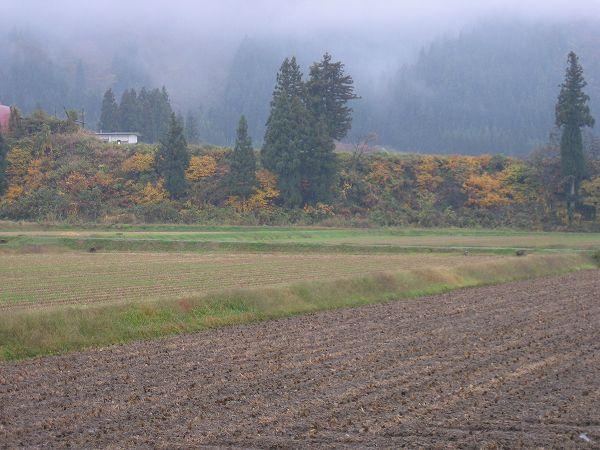 魚沼産コシヒカリの田んぼは朝から雨降りです