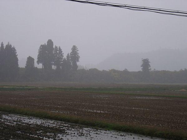 朝からずっと雨降り