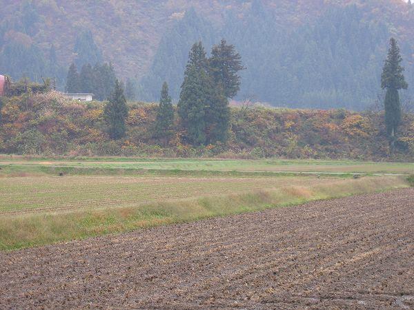 魚沼産コシヒカリの田んぼは弱い雨降り